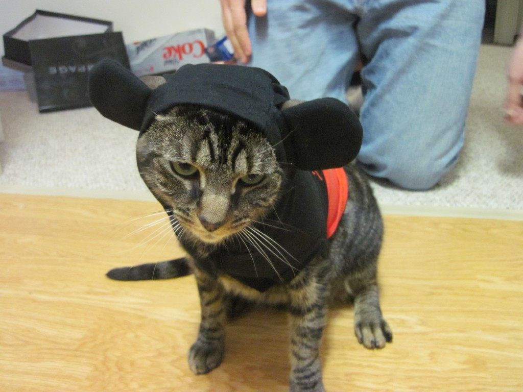 Mickey kitty